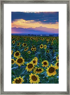 Evening Colors Of Summer Framed Print