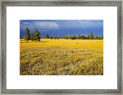 Evening Contrast Framed Print by Barry Shaffer