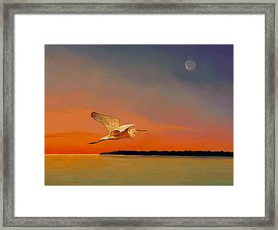 Evening Flight Framed Print by David  Van Hulst