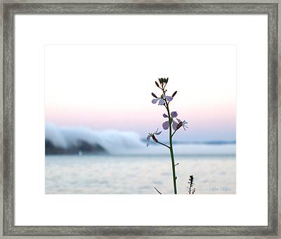 Evening Fog Rolling In Framed Print