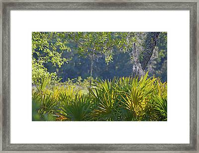 Framed Print featuring the photograph Evening Foliage by Bruce Gourley