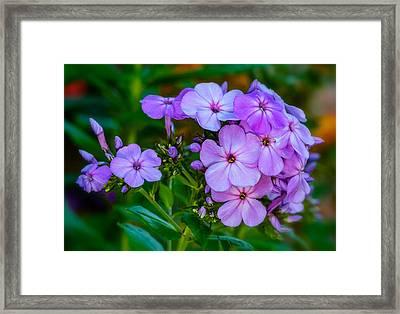 Evening Garden Framed Print by Steve Harrington