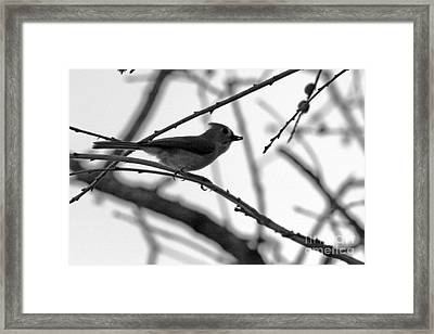 Evening Hunt 3 Framed Print