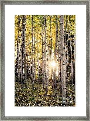 Evening In An Aspen Woods Vertical Framed Print