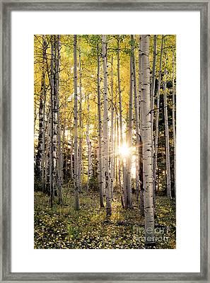 Evening In An Aspen Woods Vertical Framed Print