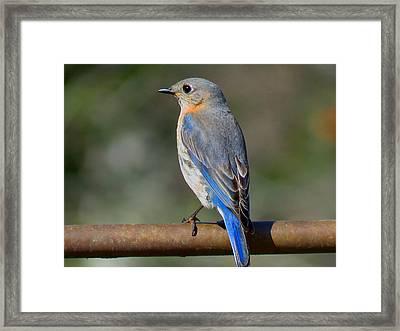 Evening In Blue Framed Print