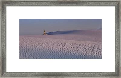 Evening In The Desert Framed Print by Jack Zievis