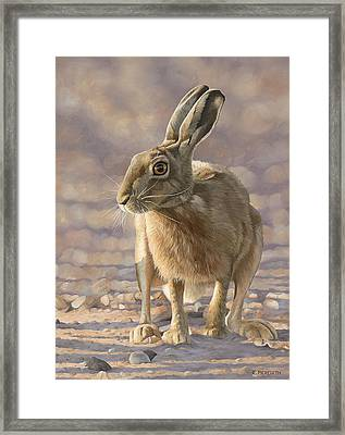 Evening Light Framed Print by Clive Meredith