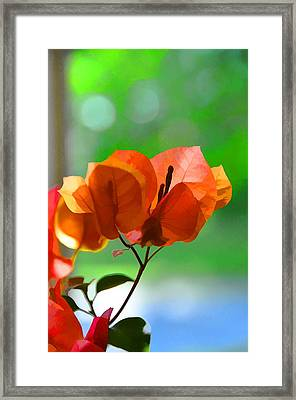 Evening Light Framed Print by Jan Amiss Photography