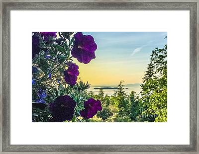 Evening Light On Orcas Island Framed Print