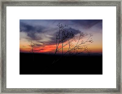 Evening Light Over Meadow Framed Print