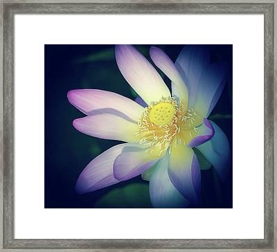 Framed Print featuring the photograph Evening Lotus  by Julie Palencia