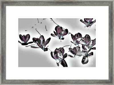 Evening Magnolia Framed Print by Linda Parker
