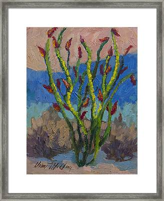 Evening Ocotillo Framed Print by Diane McClary