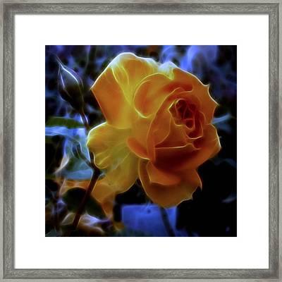 Evening Rose Framed Print