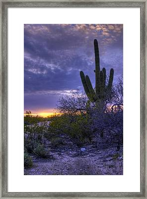 Evening Saguaro 1 - Tucson - Arizona Framed Print