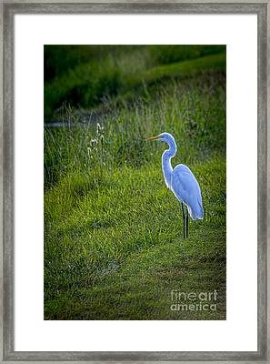 Evening Search Framed Print