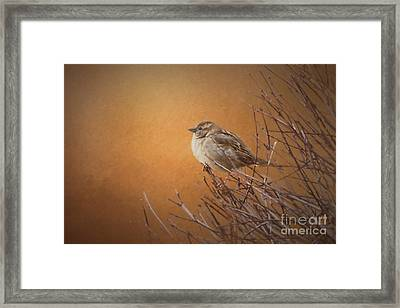 Evening Sparrow Song Framed Print