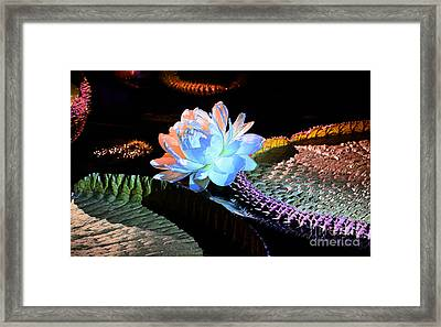 Evening Splendor Framed Print by Cindy Manero