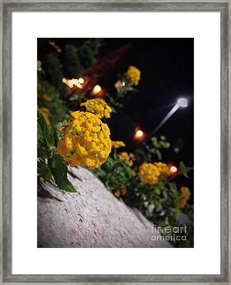 Evening Spring Framed Print