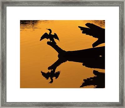 Evening Spread Framed Print