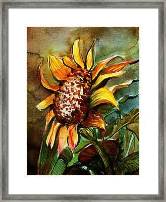 Evening Sun Framed Print by Mindy Newman