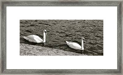 Framed Print featuring the photograph Evening Swim by Corinne Rhode