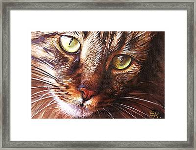 Evening Tabby Framed Print