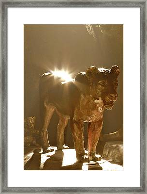 Evening's Light Framed Print