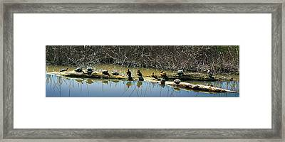 Evenly Spaced Framed Print by Frank Wilson