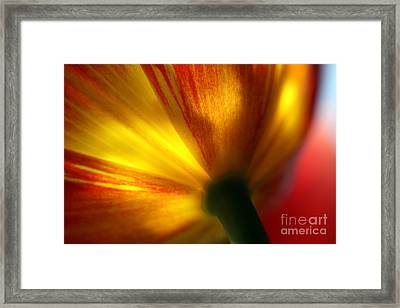 Eventually  Framed Print by Amanda Barcon