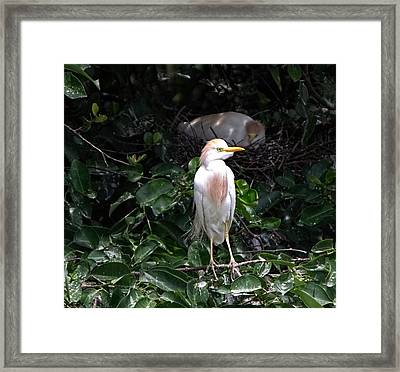 Ever Watchful Framed Print by Chrystyne Novack