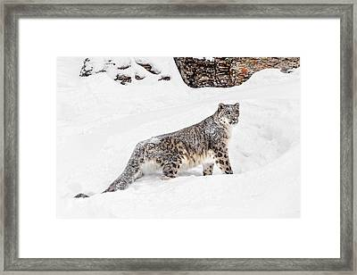 Ever Watchful Framed Print by Wes and Dotty Weber