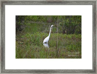 Ever Watchful Egret Framed Print by Maria Urso