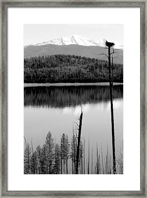Ever Watchful Framed Print by Nicholas Miller
