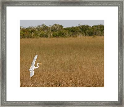 Everglades 429 Framed Print