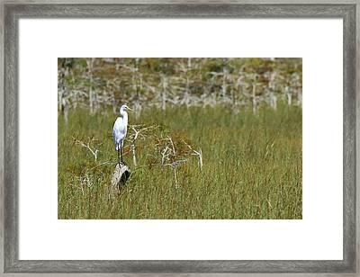 Everglades 451 Framed Print