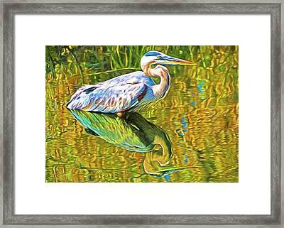 Everglades Blue Heron Framed Print by Dennis Cox