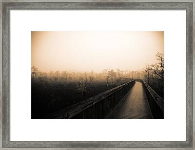 Everglades Boardwalk Framed Print