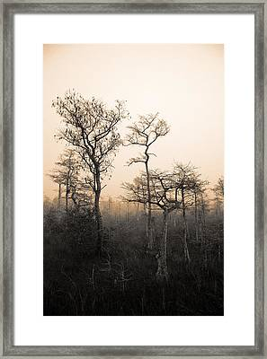 Everglades Cypress Stand Framed Print