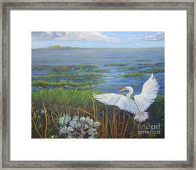 Everglades Egret Framed Print by Anne Marie Brown