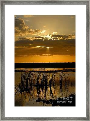 Everglades Evening Framed Print by David Lee Thompson