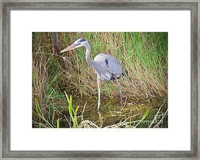 Everglades Hunt Framed Print