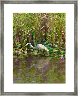 Everglades Hunter Framed Print by David  Van Hulst