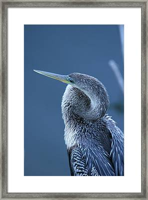Everglades Framed Print by Linda Russell