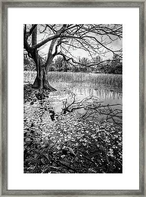 Everglades Reflections Black And White Framed Print by Debra and Dave Vanderlaan