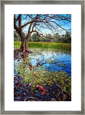 Everglades Reflections Framed Print