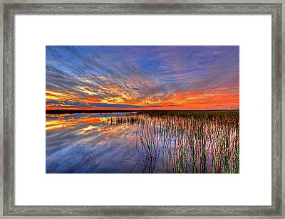 Everglades Sunset Framed Print