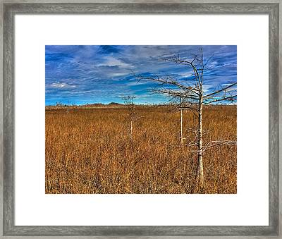 Everglades Framed Print by William Wetmore