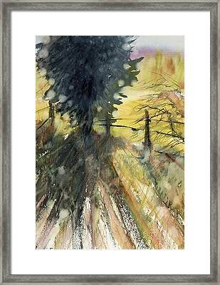 Evergreen Framed Print by Judith Levins